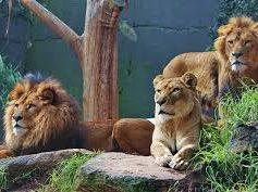História de Motivação – Os 3 Leões